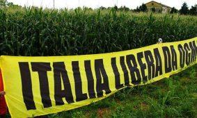 No agli OGM. Da FdI battaglia per la difesa del Made in Italy